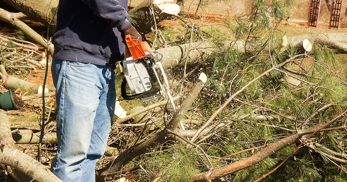 Brush & Land Clearing Summerville | Brush Removal, Tree Services