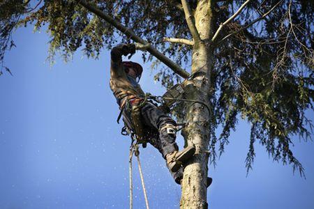 goose creek tree trimming