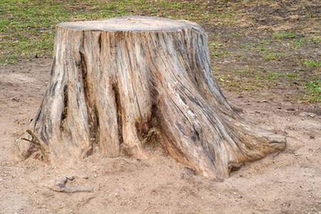 north charleston tree removal