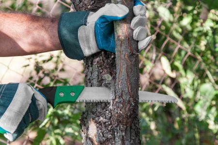 pinopolis tree services