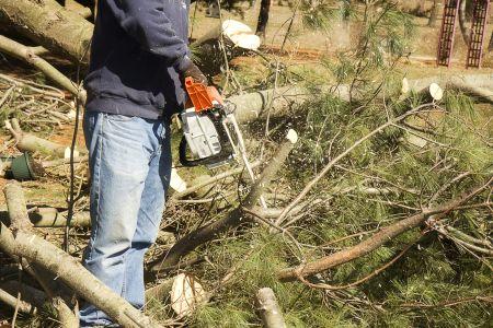 Saint Stephen tree removal